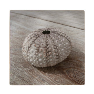 Shell On Top Of A Wooden Table Wood Coaster