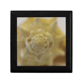 Shell photograph gift box