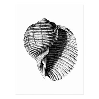 Shell Post Card