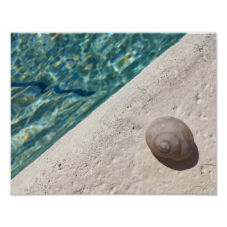 shell sea wall poster