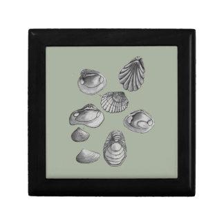 Shell sketch gift box