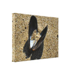 Shell - Wrapped Canvas Gallery Wrapped Canvas
