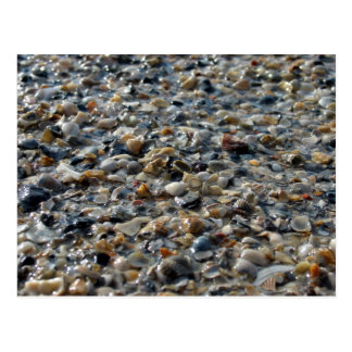 Shells and Pebbles Postcard