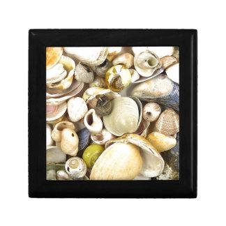 Shells Gift Box
