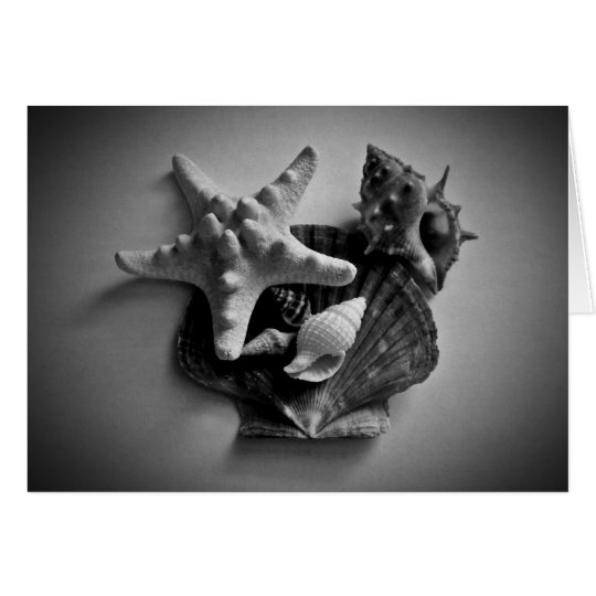Shells in black and white blank card for your text