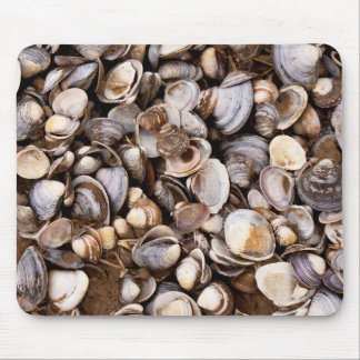 Shells in Mud Mouse Mat