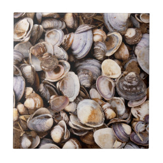 Shells in Mud Small Square Tile