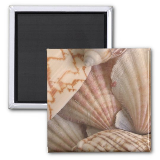 Shells Magnet