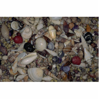 Shells of the Caribbean and Pacific Shell Photo Cut Out