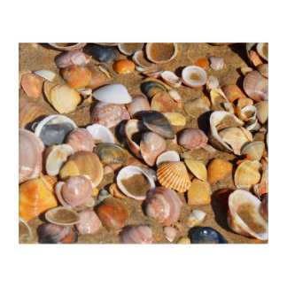 Shells On A Sandy Beach | Andalusia, Spain Acrylic Print