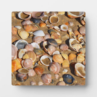 Shells On A Sandy Beach | Andalusia, Spain Plaque