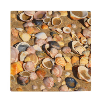 Shells On A Sandy Beach | Andalusia, Spain Wood Coaster