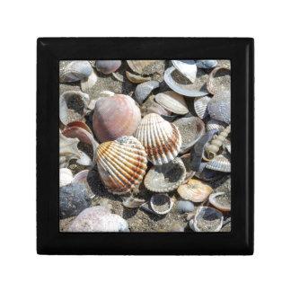 shells on the beach gift box