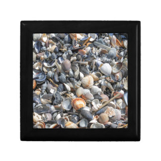 shells on the beach gift box