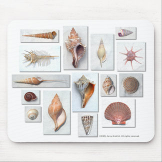 Shells on White Mouse Mat