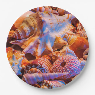 Shells Paper Plate