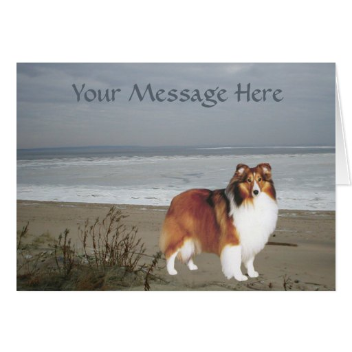 Sheltie Greeting Card