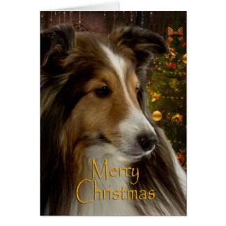 Sheltie Holiday Card