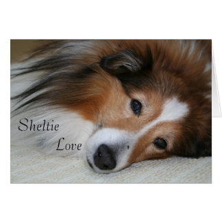 Sheltie Love Card