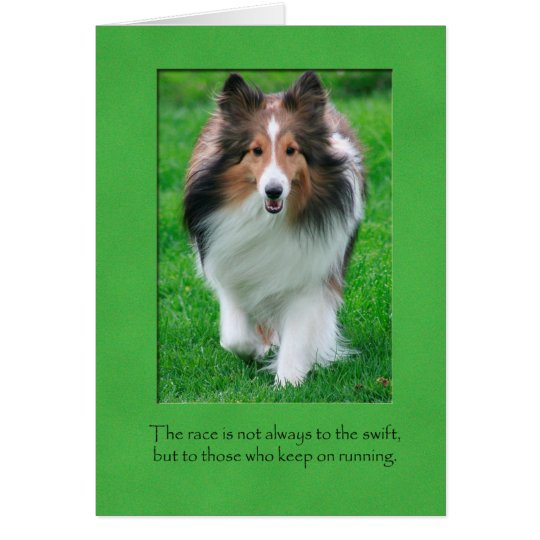 Sheltie Note Card