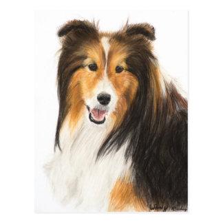 Sheltie or Shetland Sheepdog Painting Postcard