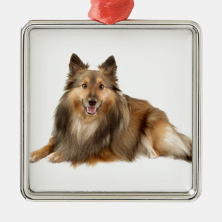 Sheltie or Shetland Sheepdog Silver-Colored Square Decoration