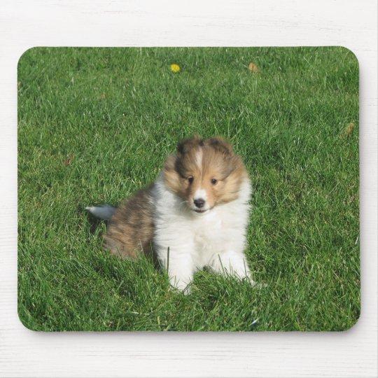 Sheltie puppy in grass mousepad