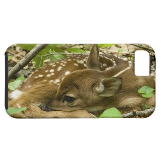 Shenandoah NP, Virginia, USA iPhone 5 Cases