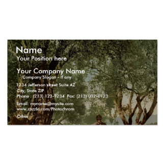 Shephard with flock in olive grove, Mentone, River Business Cards