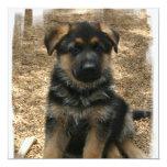 """Shepherd Puppy Invitations 5.25"""" Square Invitation Card"""
