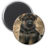 Shepherd Puppy  Magnet Fridge Magnet