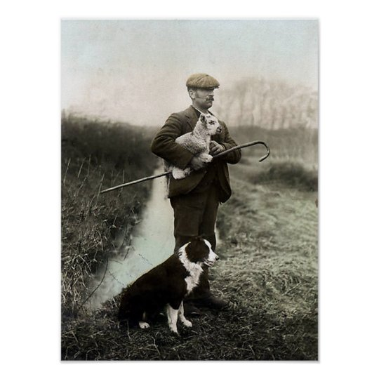Shepherd With Lamb and Border Collie~Poster Poster