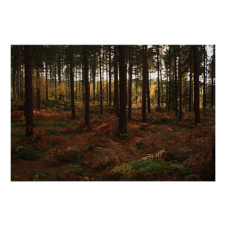 Sherwood Forest Print