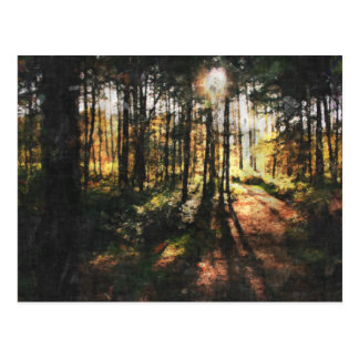 Sherwood Forest Sunset Postcard