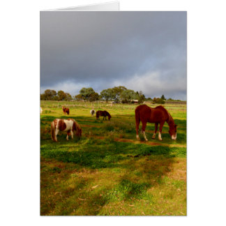 Shetland_Ponies,_Chestnut_Greeting_Card. Greeting Card