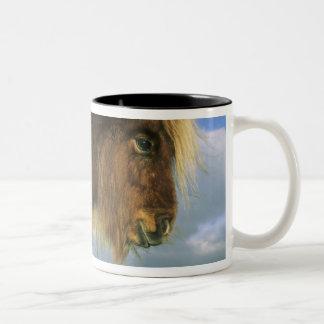 Shetland Pony, mainland Shetland Islands, 2 Two-Tone Coffee Mug