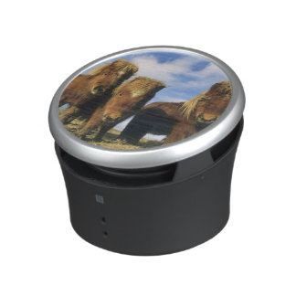Shetland Pony, mainland Shetland Islands, Bluetooth Speaker