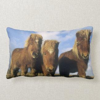 Shetland Pony, mainland Shetland Islands, Lumbar Cushion