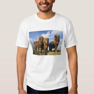 Shetland Pony, mainland Shetland Islands, T Shirts