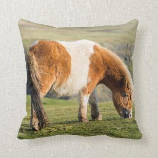 Shetland Pony On Pasture Near High Cliffs Cushion