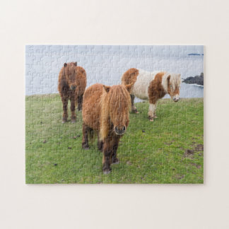 Shetland Pony on Pasture Near High Cliffs Jigsaw Puzzle
