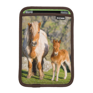 Shetland Pony On Pasture Near High Cliffs, Mare 2 iPad Mini Sleeve