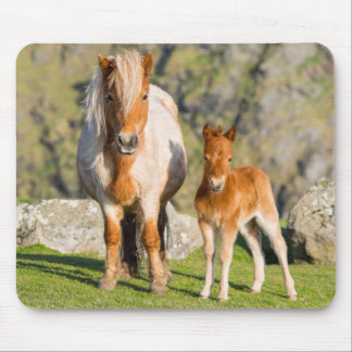 Shetland Pony On Pasture Near High Cliffs, Mare 2 Mouse Pad