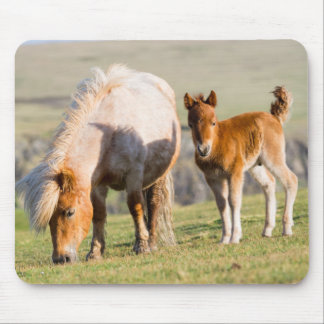 Shetland Pony On Pasture Near High Cliffs, Mare Mouse Pad