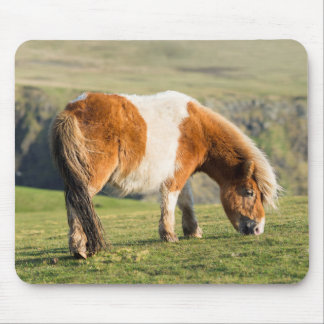 Shetland Pony On Pasture Near High Cliffs Mouse Pad