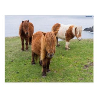 Shetland Pony on Pasture Near High Cliffs Postcard