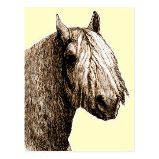 Shetland Pony Post Cards
