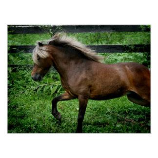 Shetland Pony Print