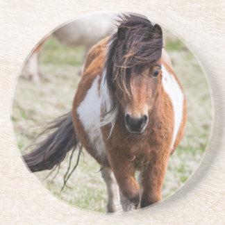 Shetland Pony, Shetland Islands, Scotland Coaster