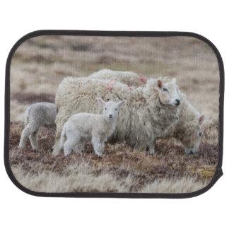 Shetland Sheep 2 Car Mat